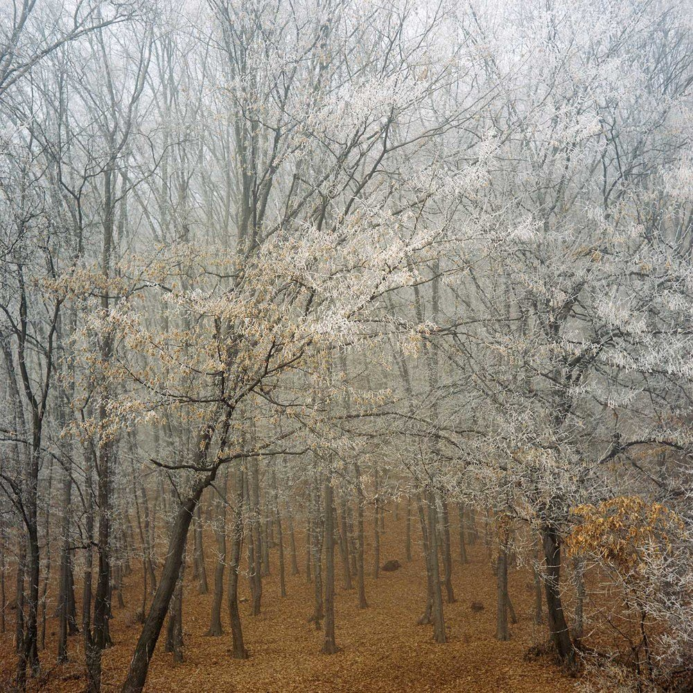 Frost | Fine Art Photography