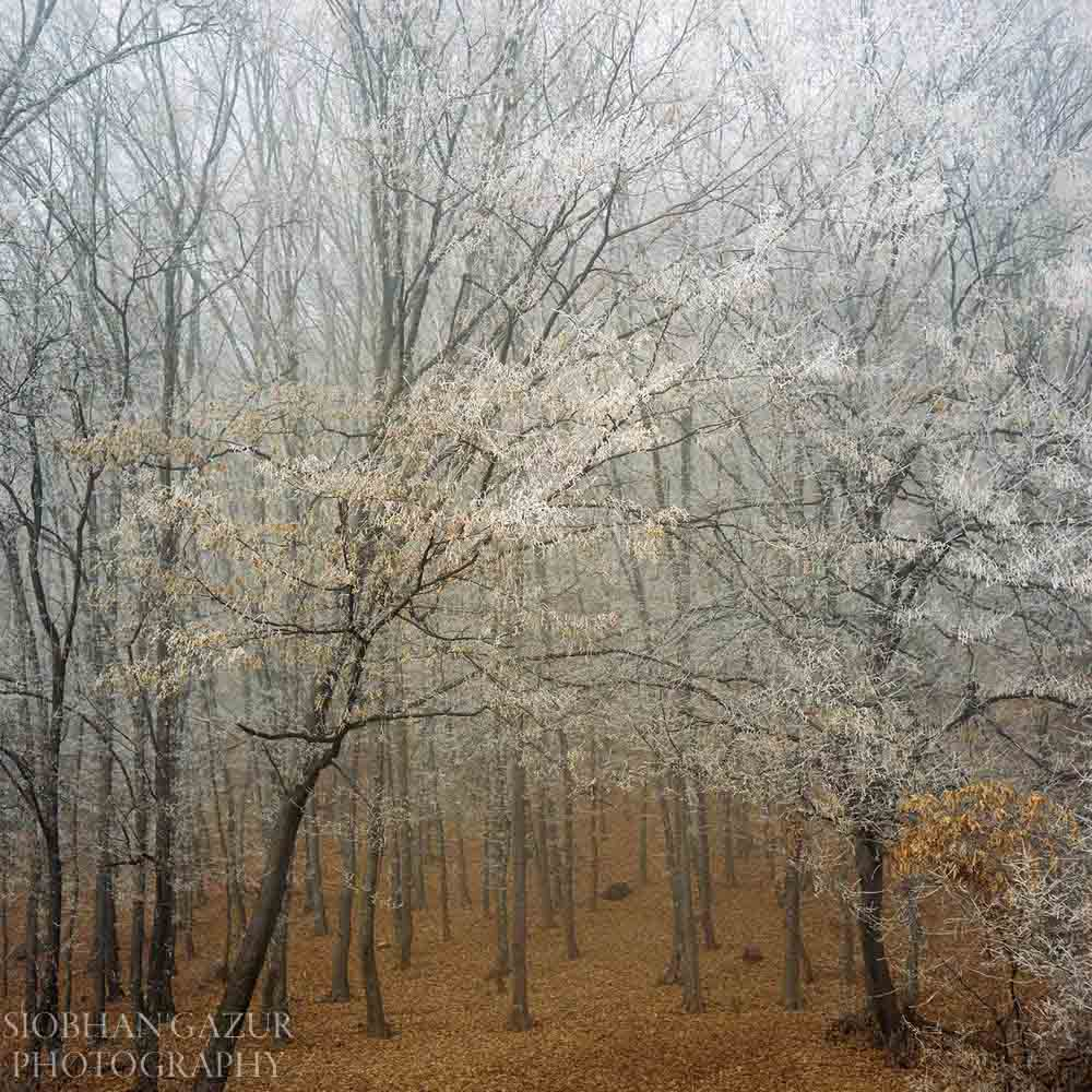 Frost | Travel Photography