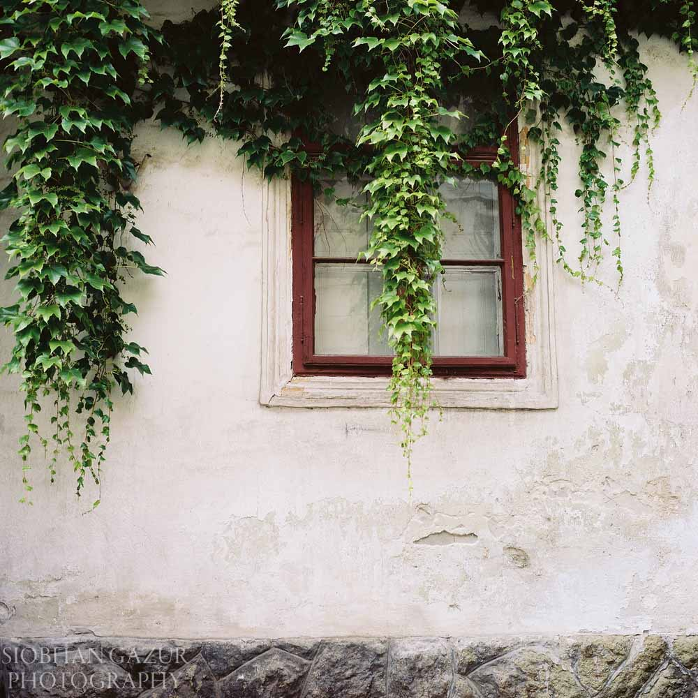 Ivy on the Window | Travel Photography