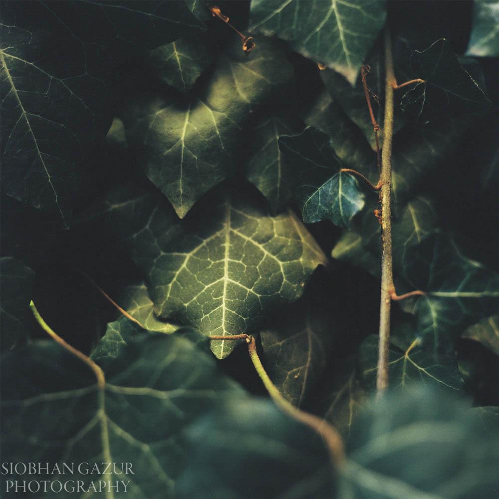 Spotlight Ivy | Travel Photography