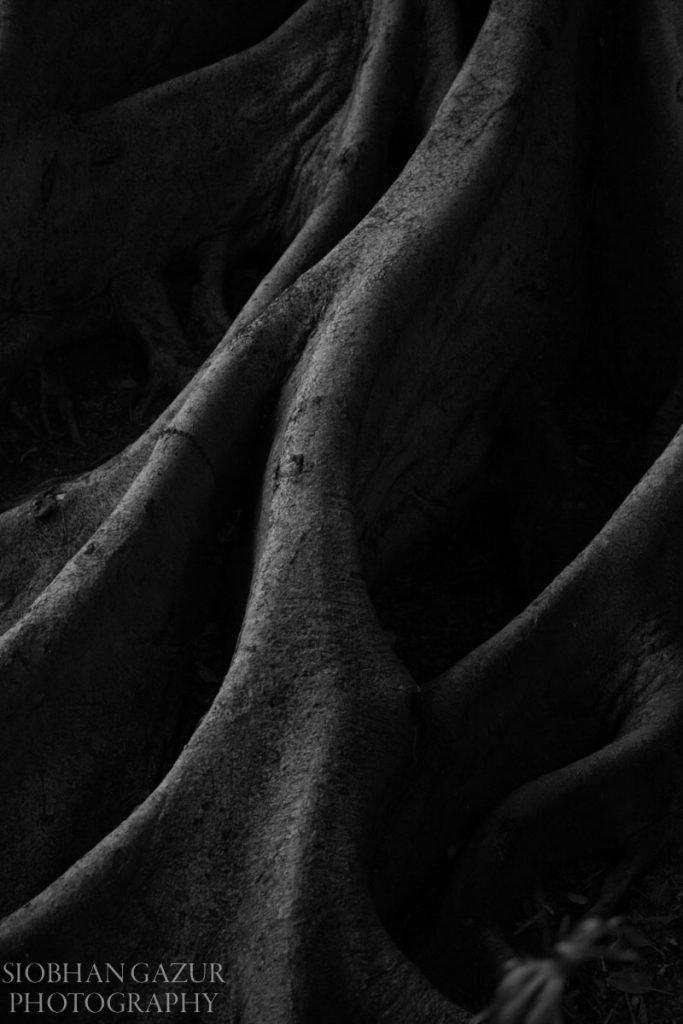 Tree | Travel Photography