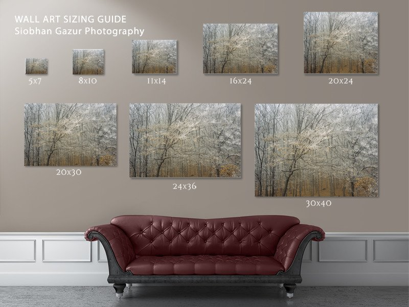 Siobhan-Gazur-Photography-Wall-Art-Display-Guide